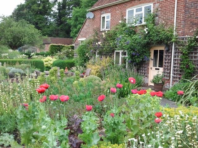Front Garden, Summer 2014